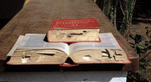 Libri_mangiati_da_termiti